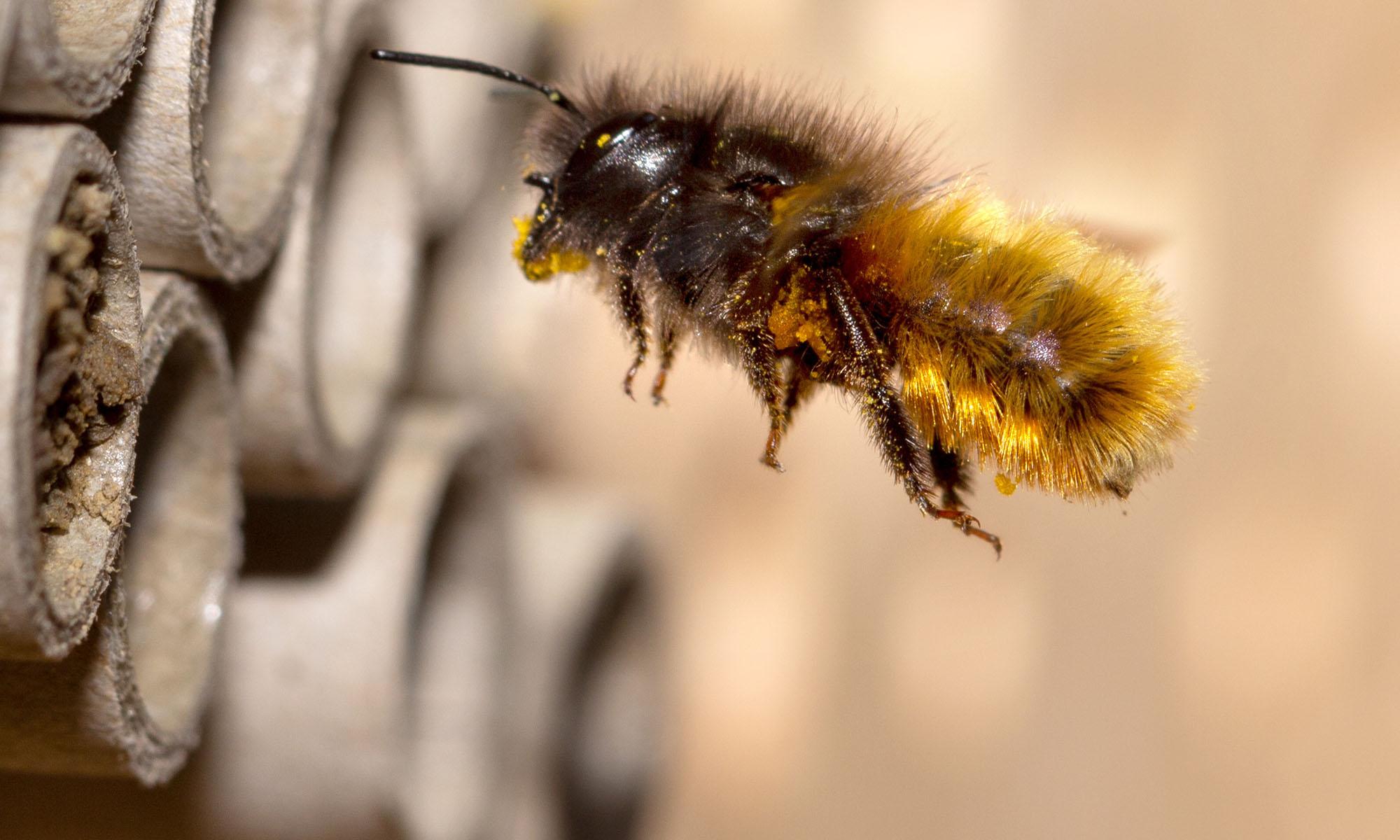 Bienenzuchtverein Wien-West